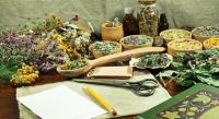 La phytothérapie : l'art de soigner par les plantes