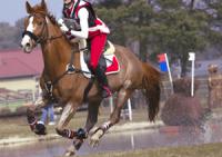 Ulcères gastriques chez les chevaux – Partie 1