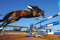 Jockey et son cheval en train de franchir un obstacle