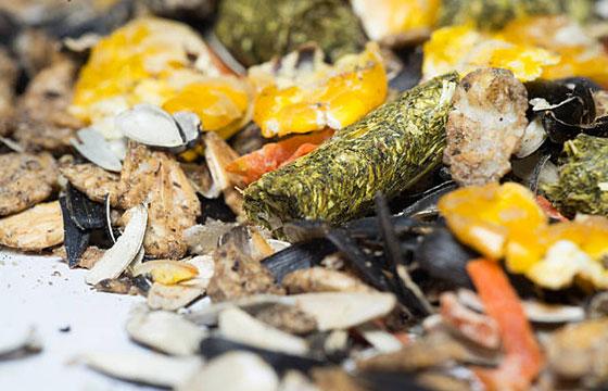 Le système digestif des équidés : intestin grêle : nourriture