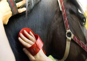 soin dermatophilose pansage cheval