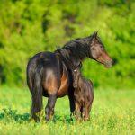 Examen coproscopique chez les chevaux – Partie 1