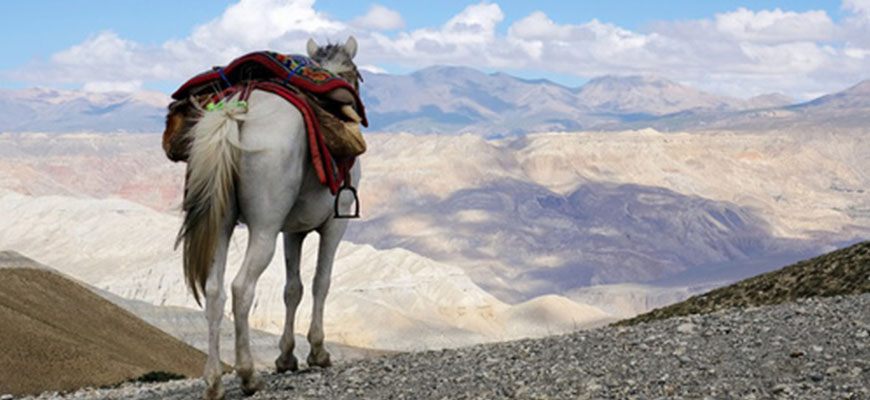 histoire-du-cheval
