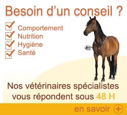 conseil_cheval.jpg