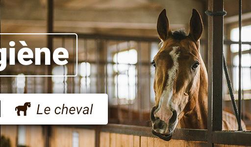 Hygiène du cheval