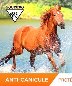 Sélection anti-canicule avec Equistro : Protégez et hydratez votre cheval