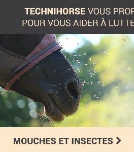 Mouches et insectes
