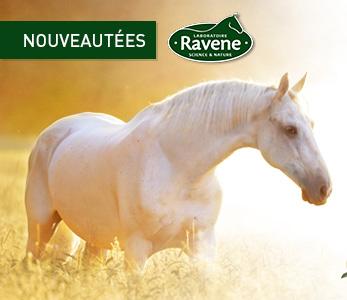 Les nouveautées Ravene pour votre cheval